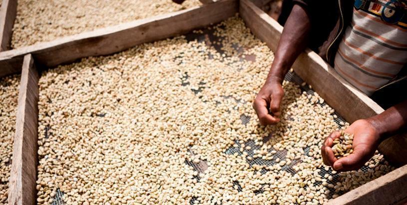 ethiopian coffee history