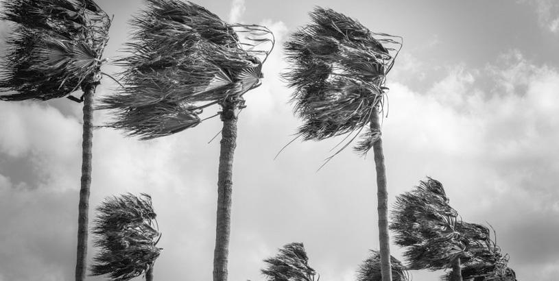 Hurricanes and Coffee: Central America in the Wake of Eta and Iota