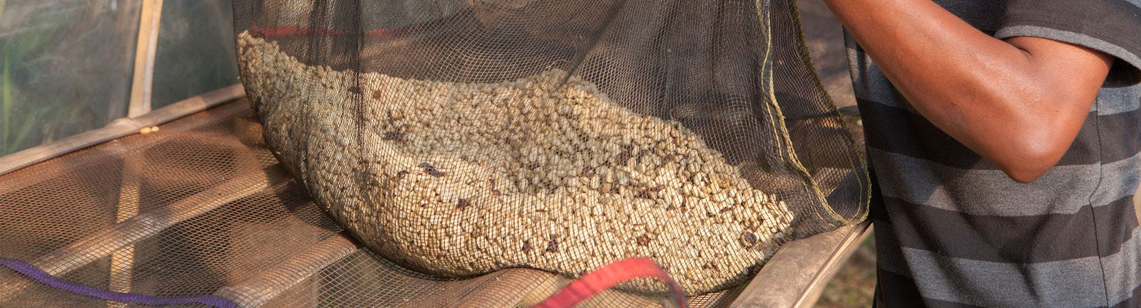 Sumatra Noesantara Aged