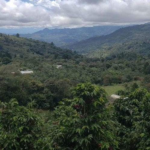 Colombia Top Lot Microlots '19